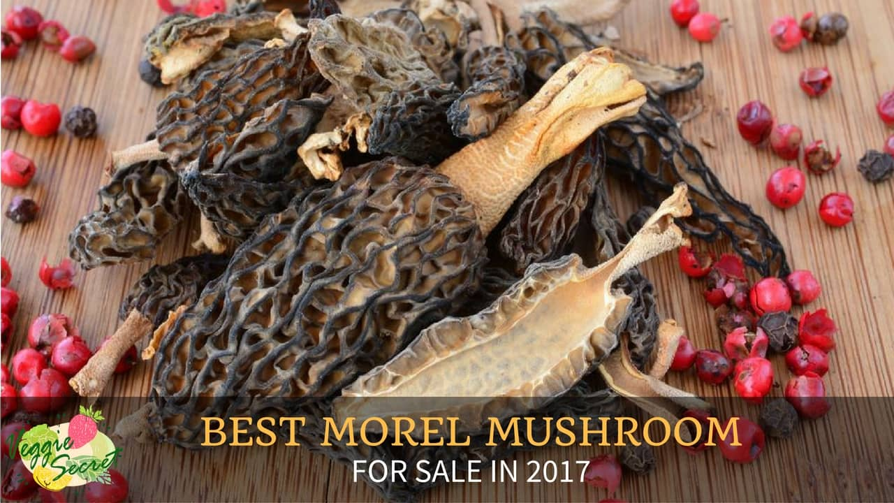 5 Best Morel Mushrooms For Sale
