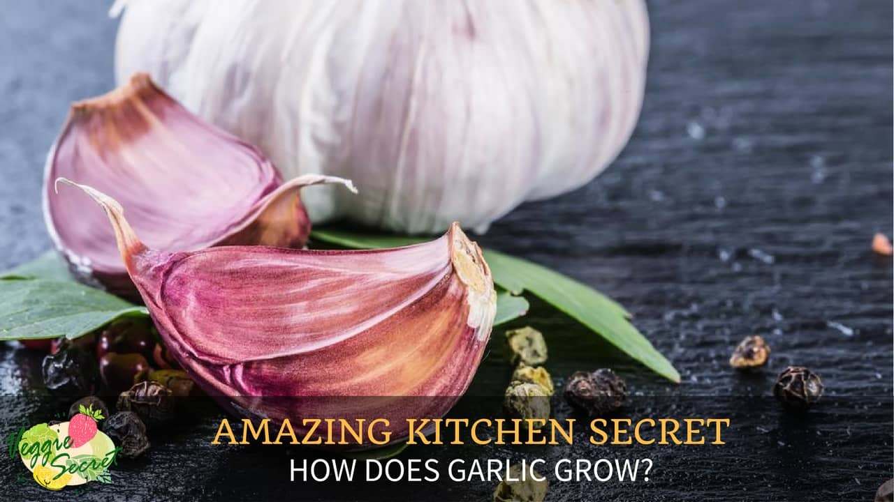 Amazing Kitchen Secrets: How Does Garlic Grow?
